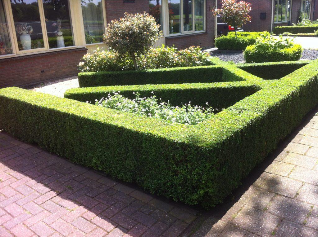 Tuin Hagen Soorten : Tips voor mooie hagen in uw tuin vechtdalgroen hoveniers