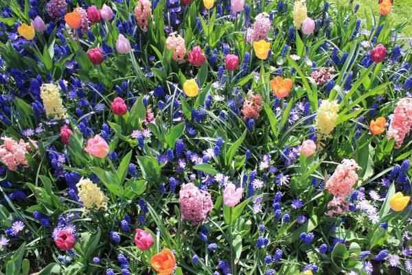 Voorjaarsbeurt - Vechtdalgroen